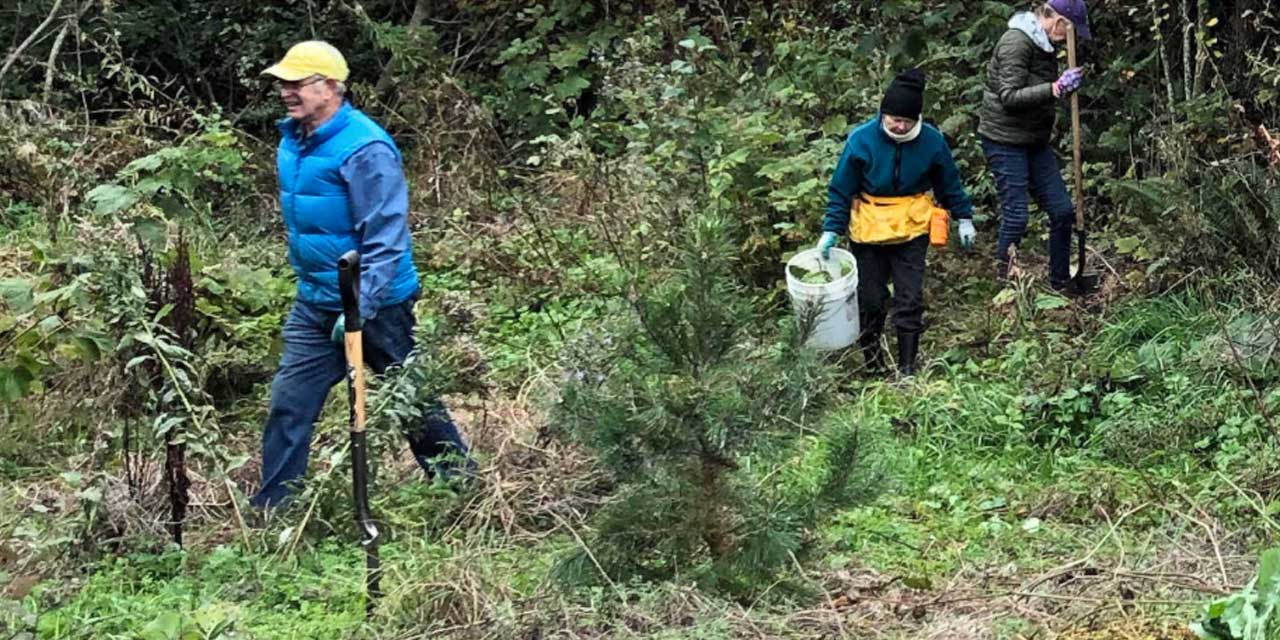 Volunteers needed to replant fire-damaged peat cell at Roxhill Park Nov. 16