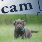 Police issue warning not to fall for 'Puppy Scam' like White Center resident did